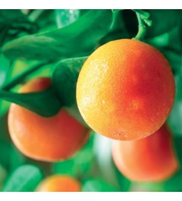 Sinaasappel - 1